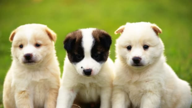 cute-puppies