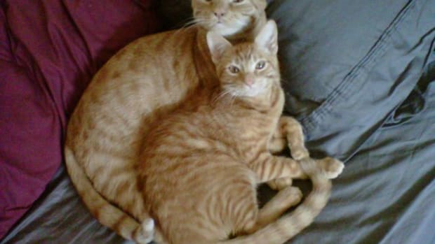 cheddar and hobbes
