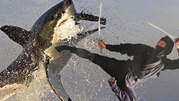 ninjavs-shark