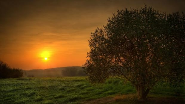 132636_sunset-landscapes-nature-trees-fields-skyscapes-2560x1600-wallpaper_www.wall321.com_81