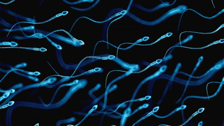 MEMBERS ONLY: Every Sperm is Sacred