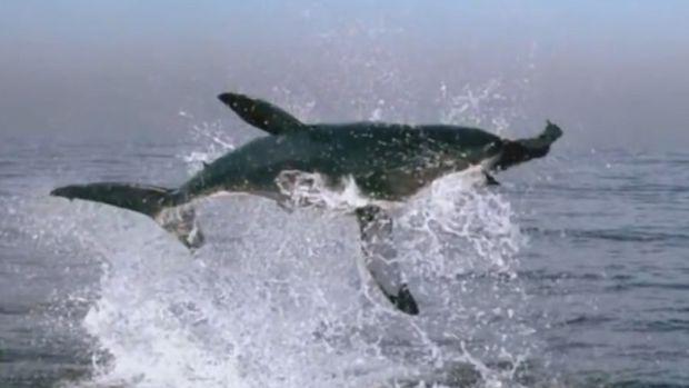 shark jump