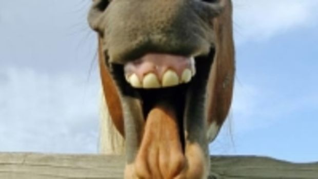 F_001_laughing_horse