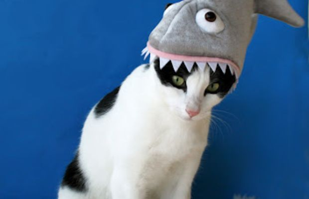 This cat in the (shark) hat.