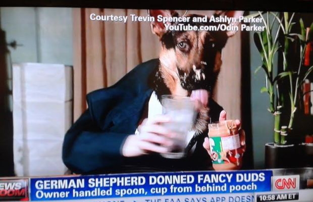 DogNews