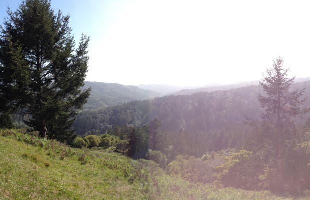 muir_woods_cesca