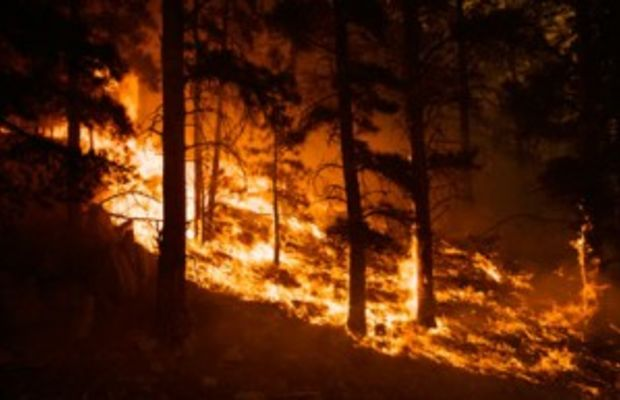 burning-forest-picture-2