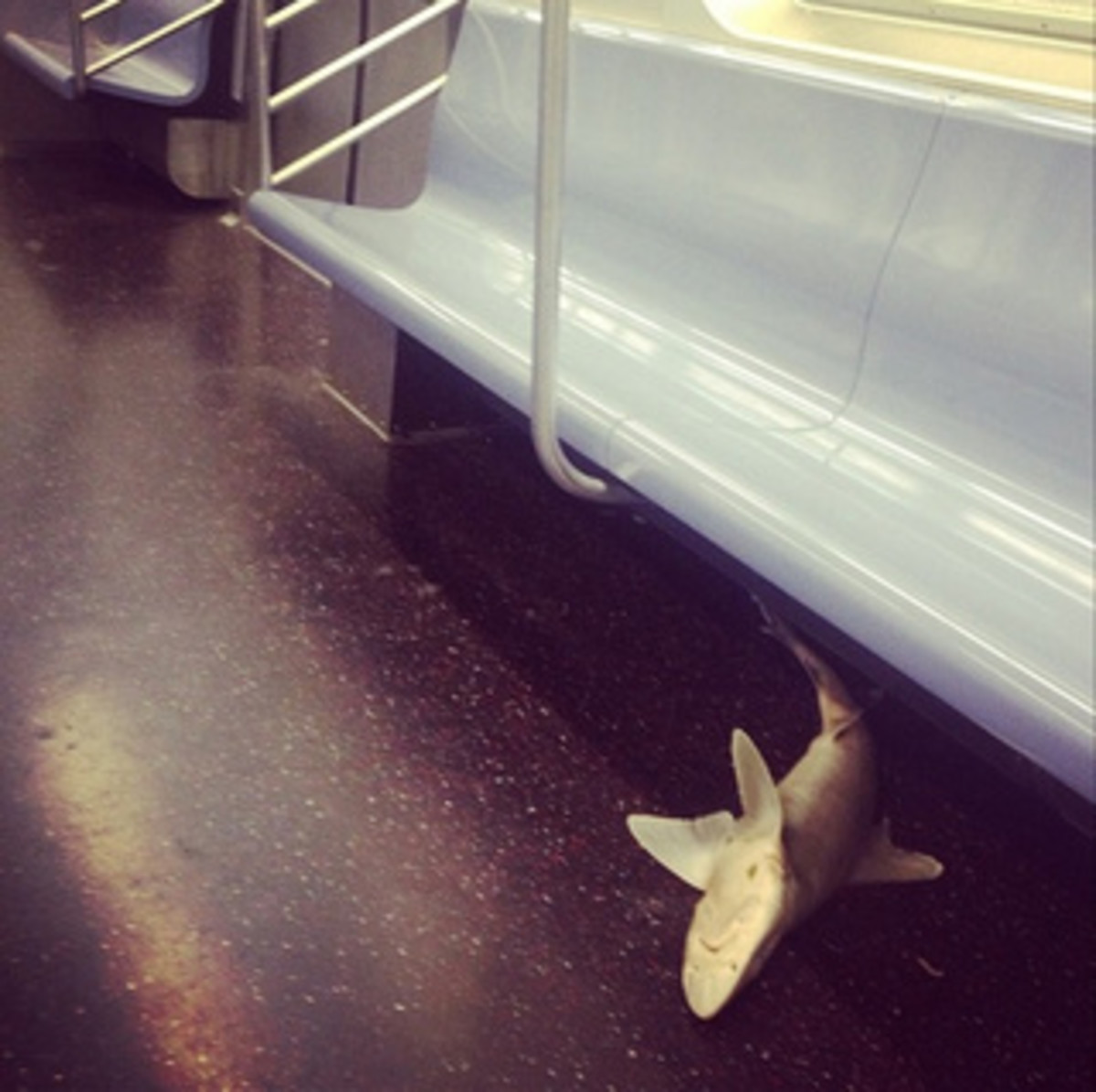 Shark subway