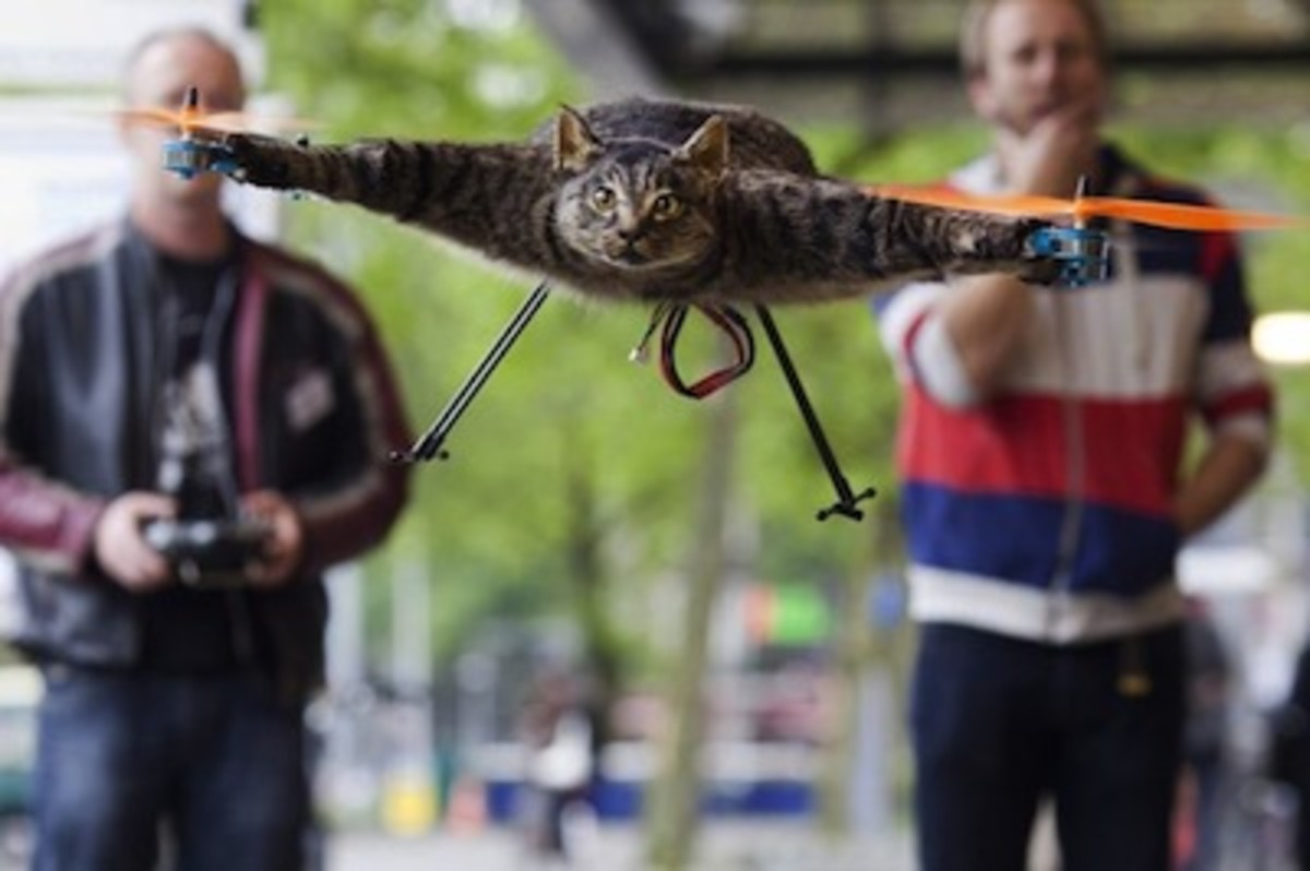 Cat Helicopter