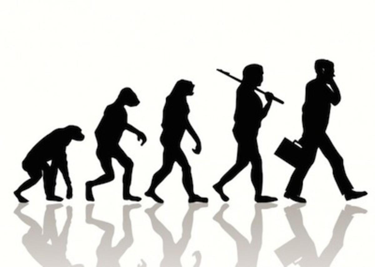 evolution-620x442