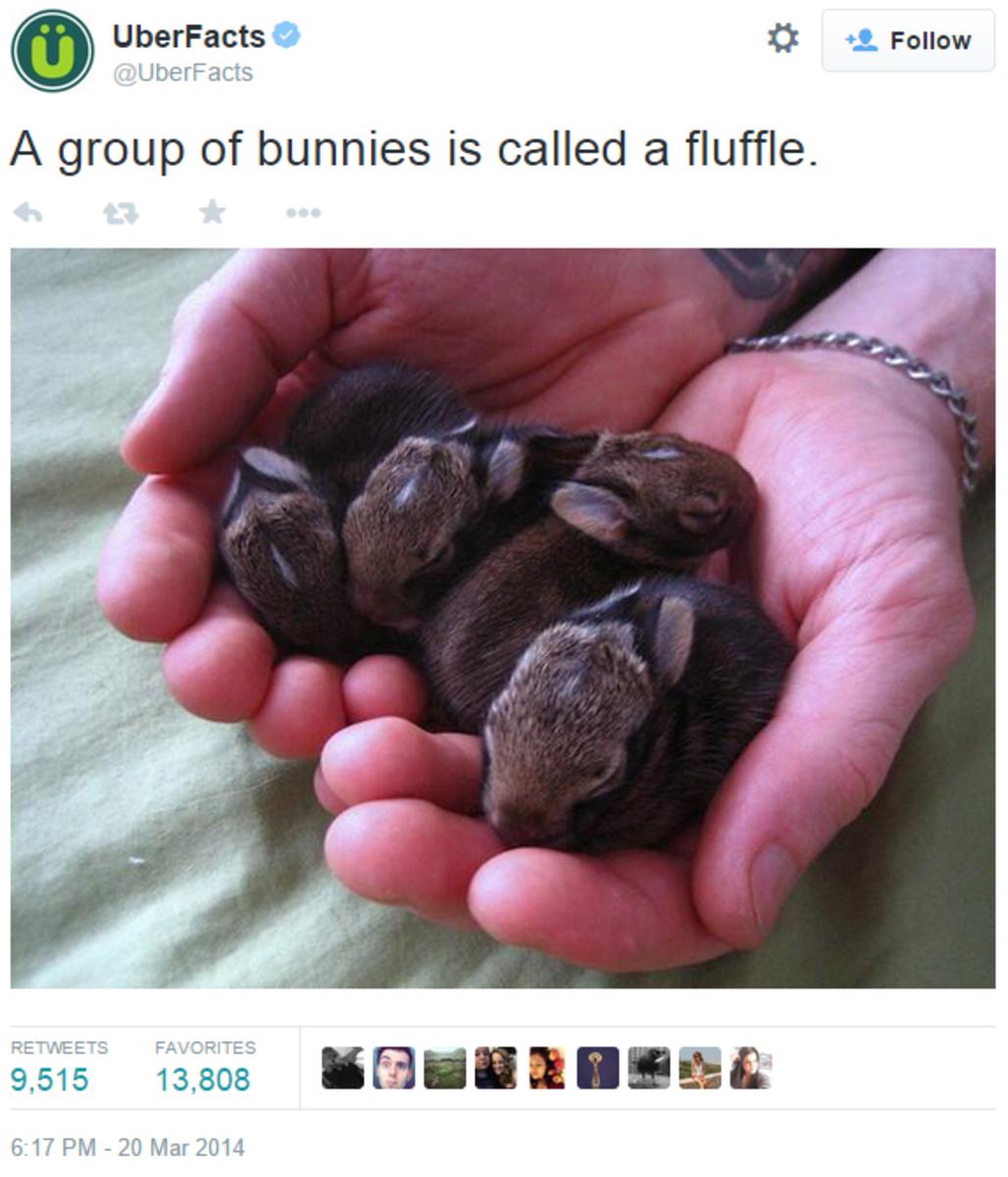 UberFacts on TwitterA group of bunnies
