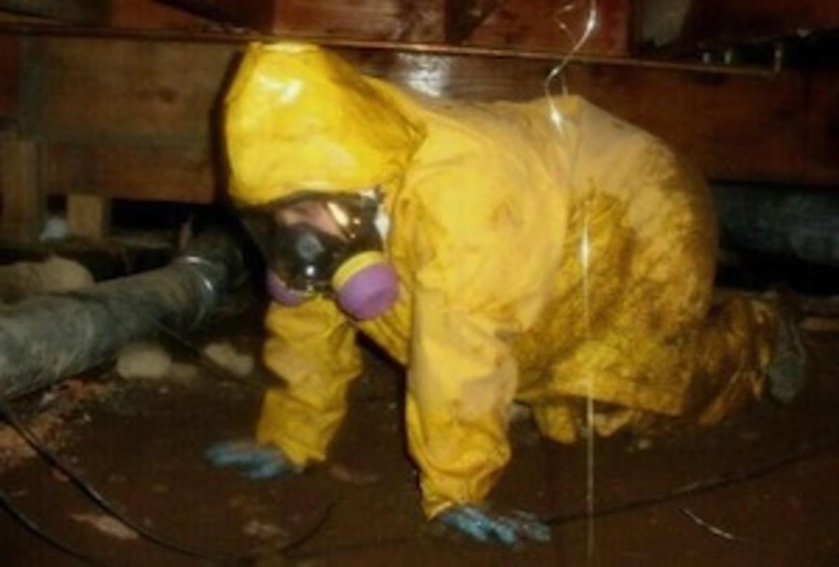 sewage-crawlspace