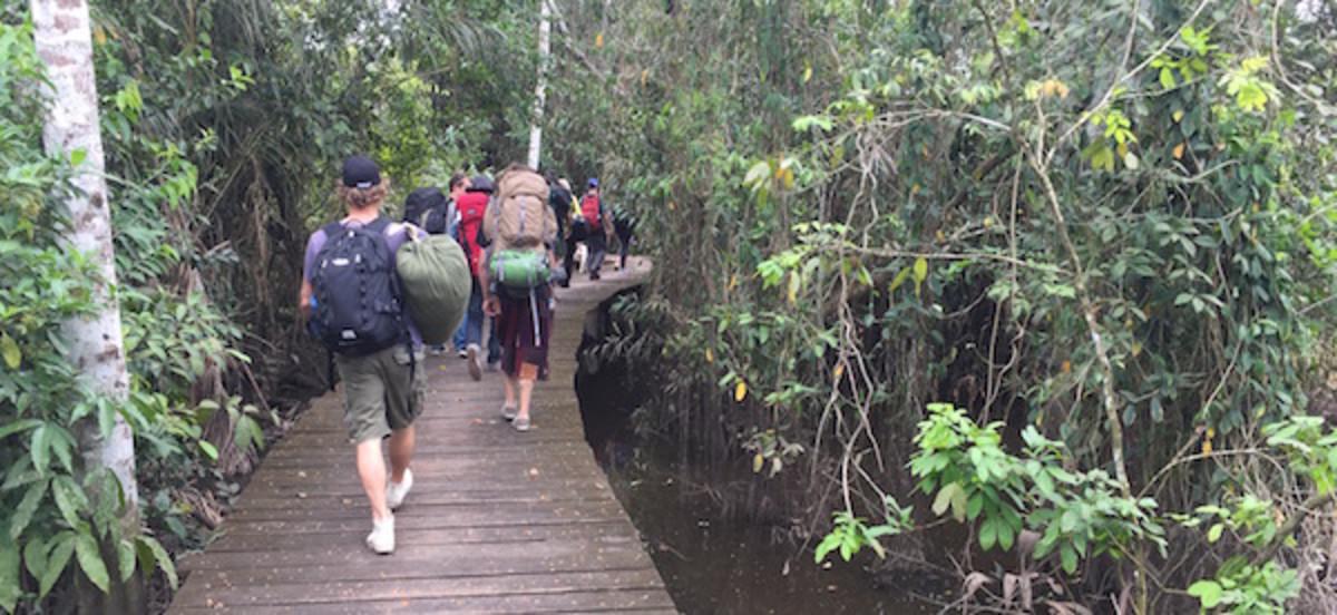 Ayahuasca journey