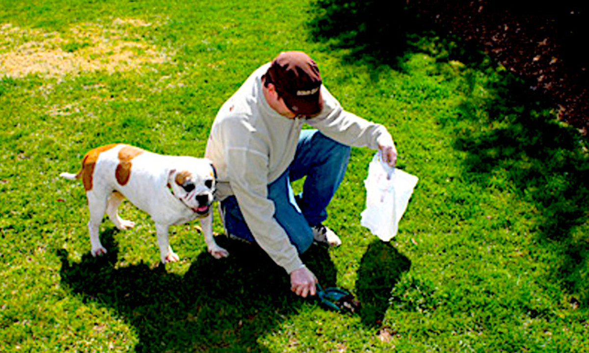 dog-waste-cleanup.jpg